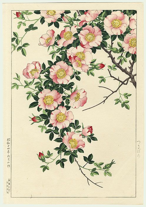 Japanese Wood block print,  Wild Rose Vine by Nishimura Hodo [1930's]