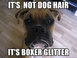 Image Result For Boxer Dog Meme Boxerdog Boxerpuppy Boxer Dogs Funny Boxer Puppies Boxer Dog Quotes