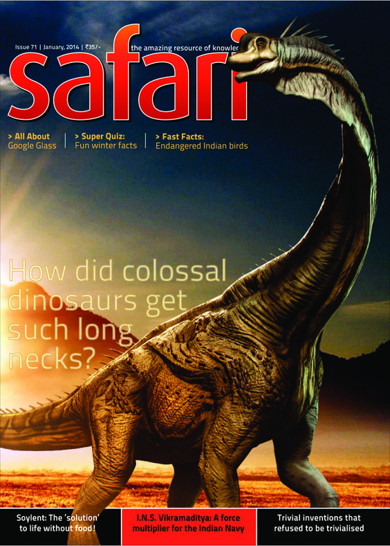 Safari - January 2014 : How did colossal dinosaurs get such long necks? Some species of herbivorous dinosaur had necks six times longer than that of the giraffe. What was the reason for this great length and why did the neck not crumple down in a heap? The answers, have finally been found.