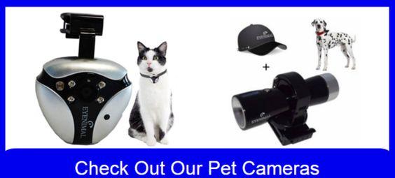 Win a Free CatDog Pet Camera – Cat Dog Pet Supplies