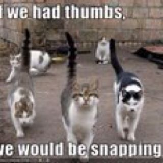 If only we had thumbs we'd be snapping