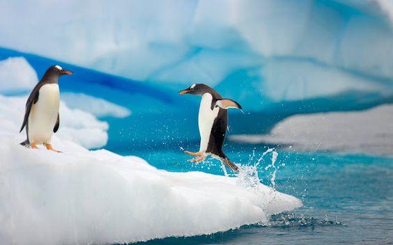 Antarctica - Penguins.