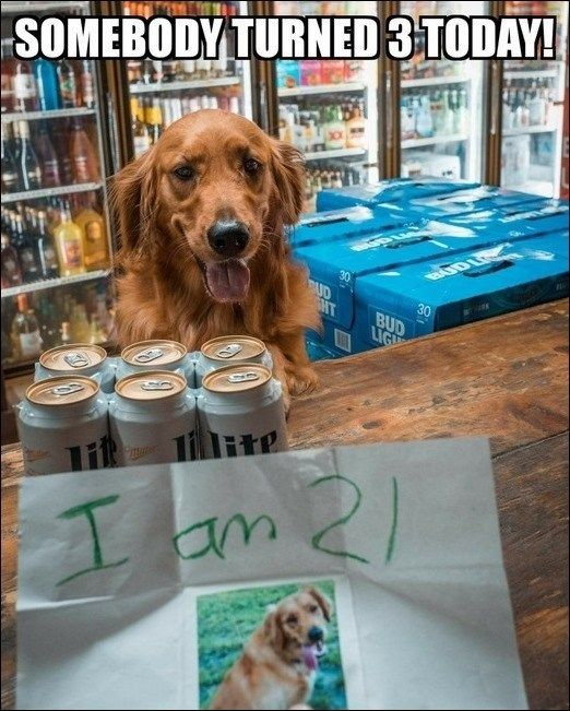 I M 21 Funny Dog Pictures Funny Dogs Funny Animals