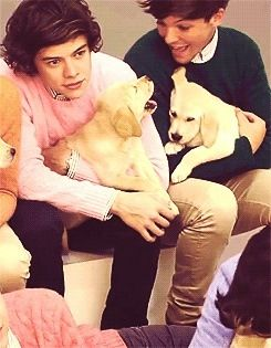 Look at Louis and the puppy aww!