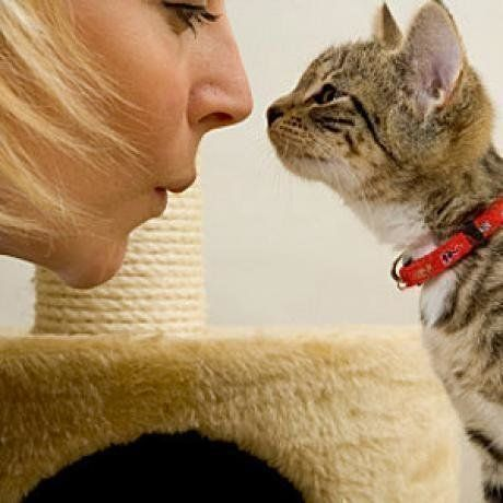 """Learning how to communicate with your cat is an important part of training, and helps to reinforce the bond you two share. Cats communication communicate through a mixture of different sounding 'meows,' although some cats are more vocal than others, facial expressions and tail and ear positioning.This article describes several methods of cat communication and explains what different 'meows,' and ear and tail positioning likely indicate.My favorite is interpreting the """"slow blink"""" as ..."""