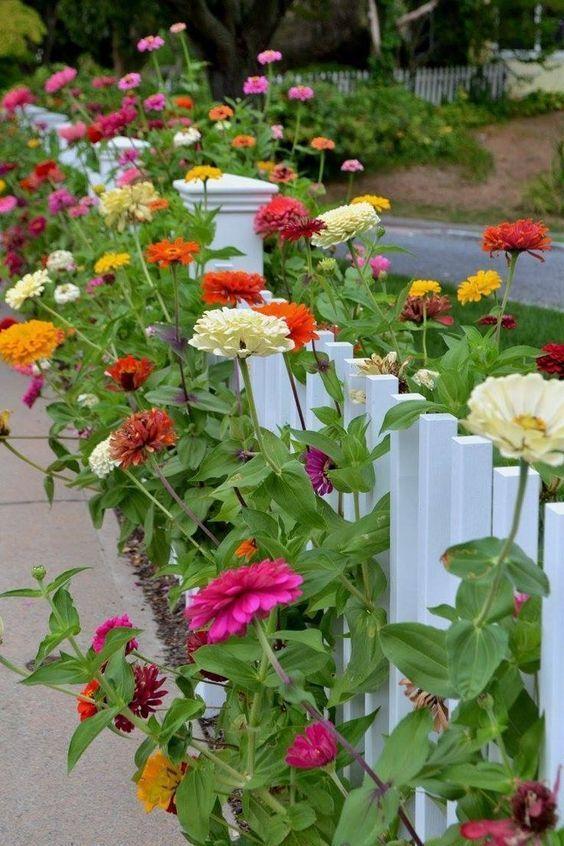Zinnia The Most Colorful Flowers For Your Garden In 2020 Heat Tolerant Flowers Flower Garden Design Beautiful Flowers Garden