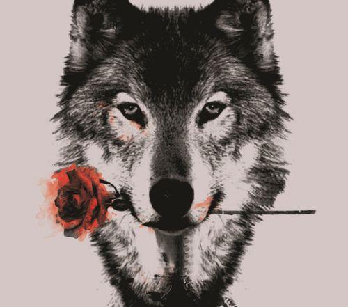 He wolf, que esse é menino