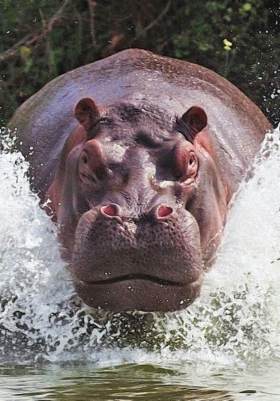 Pin Von Tiborhaffner Auf Animals Tiere Ausgestopftes Tier Natur Tiere
