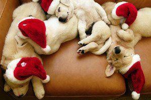 Amigos, não posso lhes desejar melhor presente de Natal do que minha gratidão, meu amor, meu respeito, e claro, eu! Sei que as vezes os tempos são difíceis e o ano é pesado, mas nada como celebrar nossa união nessa data tão especial.  Vocês são meu presente de Natal o ano inteiro. Obrigada por todo apoio e dedicação, boas festas, me convidem!