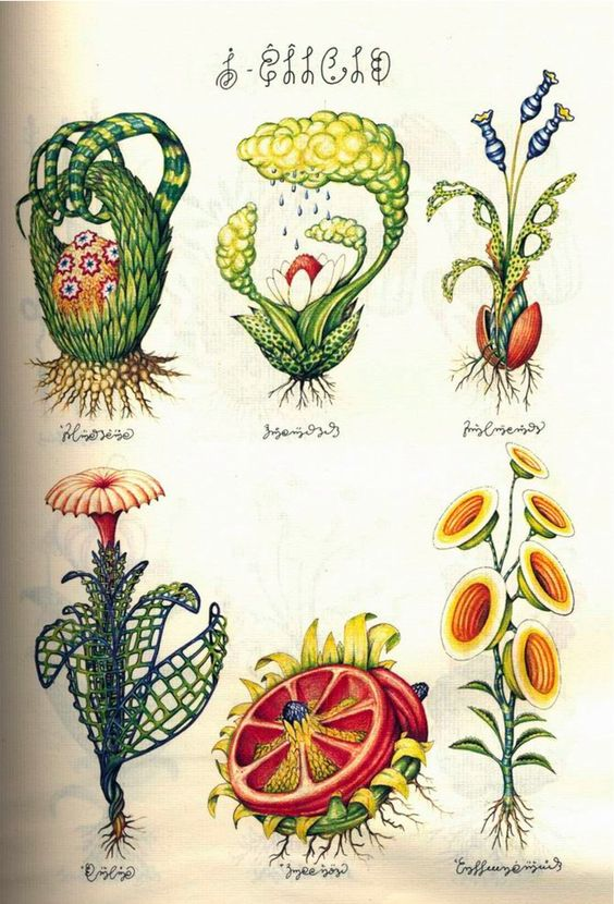 Some otherwordly illustrations taken from Luigi Serafini's masterpiece Codex Seraphinianus, a fantastical encyclopedia of the unknown completed between 1976-1978, and published in an extremely limited edition in 1981.  This is a really incredible book!  Too bad it's OOP.