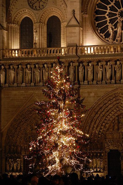 Christmas tree in front of Notre Dame, Paris http://imgsnpics.com/christmas-tree-in-front-of-notre-dame-paris/