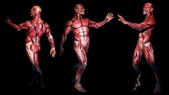 Disso Voce Sabia?: Pesquisadores criaram Google Maps do corpo humano