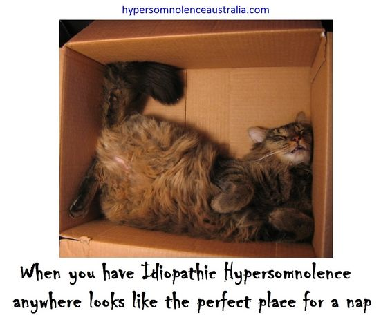 I have IH I can fall asleep anywhere  https://www.facebook.com/hypersomnolenceaustralia