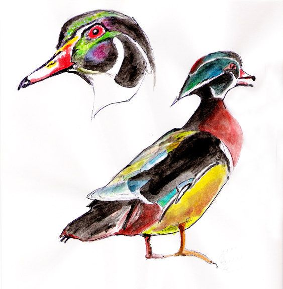Wood Duck by Pintor