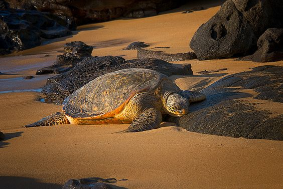 On the Beach | Flickr - Photo Sharing!