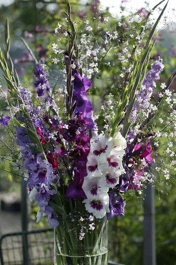 De bladeren van de gladiolen zijn zwaardachtige gevormd, vandaar dat de populaire naam van de gladiool 'zwaard lelie' is. De gladiool is een teken van kracht en overwinning geworden.