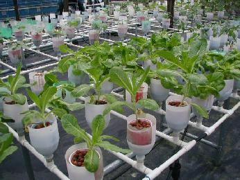 Urban farming LED lights  http://highpower4s.com/led-grow-lights-pros-and-cons/