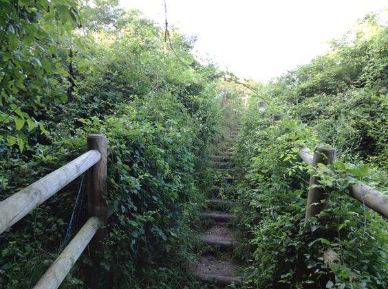 Balade au Parc des Beaumonts, l'odeur des sous-bois après la pluie, Montreuil | Parisianeast