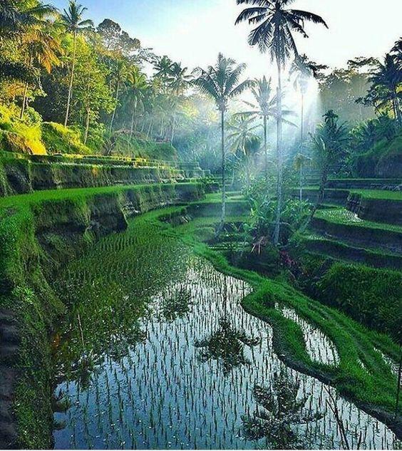 #Bali