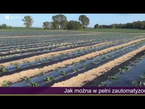 Fertygacja Truskawek W Polu I Pod Oslonami Terra Sorb Radicular Youtube Terra Farmland Outdoor