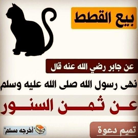 حكم بيع القطط قناة يوسف شومان السلفية Words Quotes Wisdom