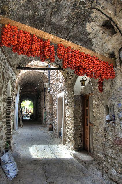 Tomato Tunnel - Chios Island, Greece