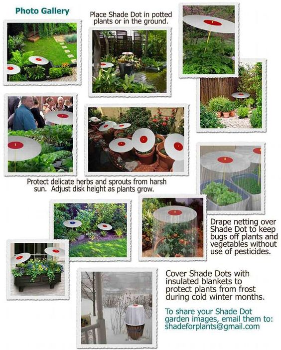 Photos - Shade for Plants - Protect plants from harsh sun with plant Shade Dot - spotshading for plants