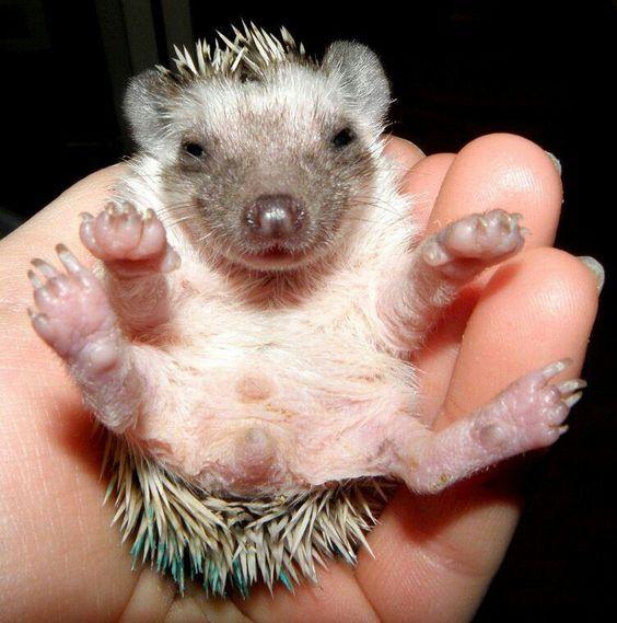 So tiny: