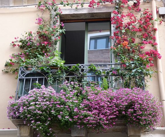 Container flowers c t balcons et terrasses pinterest for Balcony flowers