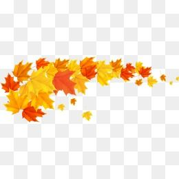 Maple Leaves In Autumn Maple Leaf Clipart Fall Autumn Png Transparent Clipart Image And Psd File For Free Download Maple Leaf Clipart Leaf Clipart Maple Leaf
