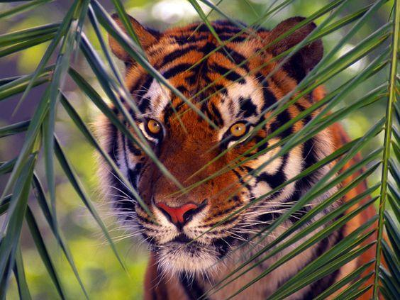 красивые картинки звери: 32 тыс изображений найдено в Яндекс.Картинках