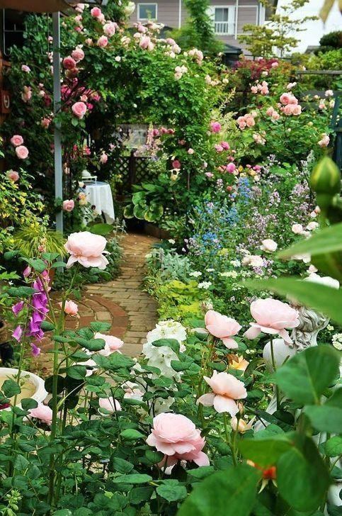 Secret Roses Garden Roses Garden Roses Secret Rose Garden Design Cottage Garden Garden Inspiration