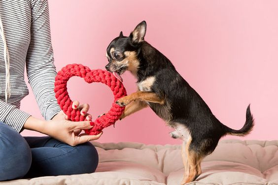 Shop Valentine's Day Collection Rope Heart