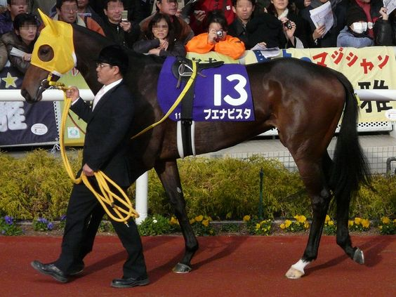 Japane's 2010 Horse of the Year, Buena Vista, isn't just your regular mare.   Buena Vista won titles in the Japan's most prestigious competitions like the Japan Cup, Tenno Sho, and Victoria Mile. It's also worthy noting that she's the highest earning horse in history.  Checkout some other legendary horses throughout history:   http://central.parellinaturalhorsetraining.com/2013/08/the-wonder-of-the-horse-seven-great-horses-from-throughout-history-2/