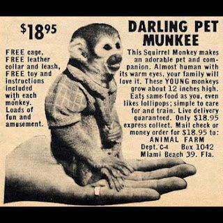 Check out the Mail Order inspired music of Darling Pet Munkee