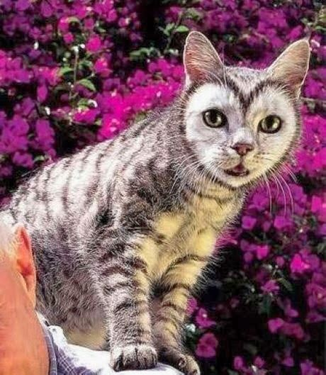 5 Pets with strange and amazing markings | The Pet's Planet. (Cat with perfect heart shape on face.):