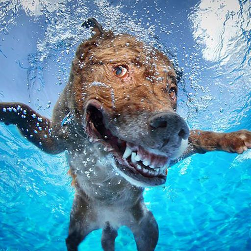 Funny Dogs Swimming Dog Photography Dog Swimming Dog Photos