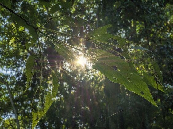 https://flic.kr/p/v5B4sA | Sol, Luz, Vida... No Parque Estadual da Pedra Branca. Rio de Janeiro, Brasil. | Sun, light, life... At Parque Estadual da Pedra Branca, the biggest urban forest in the planet.  Jacarepaguá district, Rio de Janeiro, Brazil. Have a superb day! :-)  <u><i>To direct contact me / Para me contactar diretamente:</i> </u><b>lmsmartinsx@yahoo.com.br</b>