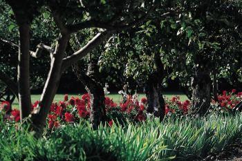JARDIN Le jardin du château de Talmay a été dessiné en 1752 et est composé aujourd'hui d'un verger d'espèces anciennes, un labyrinthe. Nous retrouvons également une grande perspective, un canal et des allées bordées de topiaires à Talmay en Côte-d'Or en Bourgogne