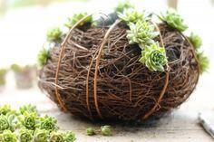 modern kürbis design selber machen dekorativ ideen sukulente grün