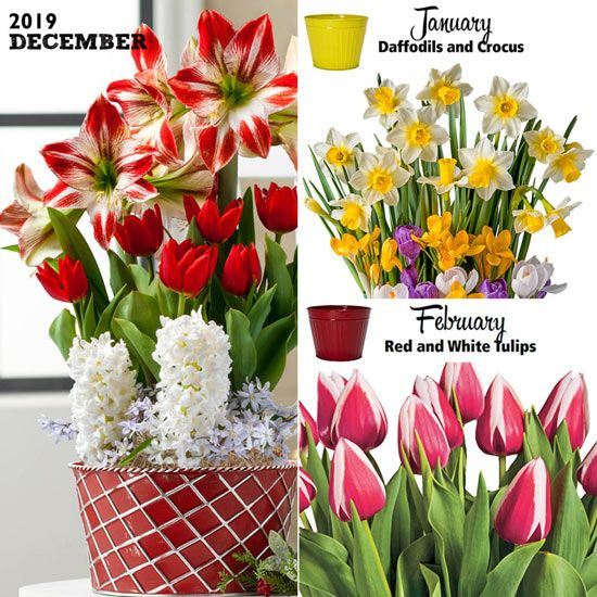 Pin By Amylocks On Gift Ideas In 2020 Spring Bulbs Garden Indoor Flowers Garden Bulbs