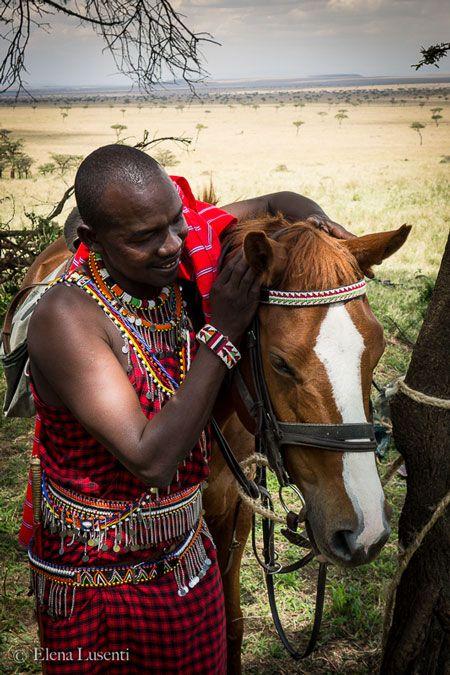 masai-horse