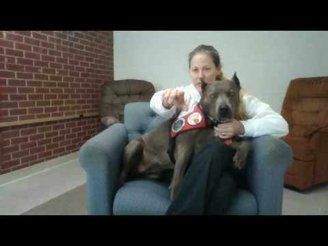 A special message from Elle the pit bull to Aurora City Council - YouTube