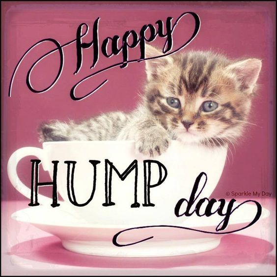 Happy Hump Day #wednesday kitten cat cute hump day