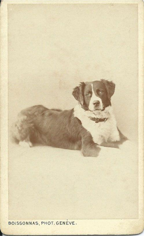 c.1870s St. Bernard cdv. Photo by Boissonnas Phot., Geneve
