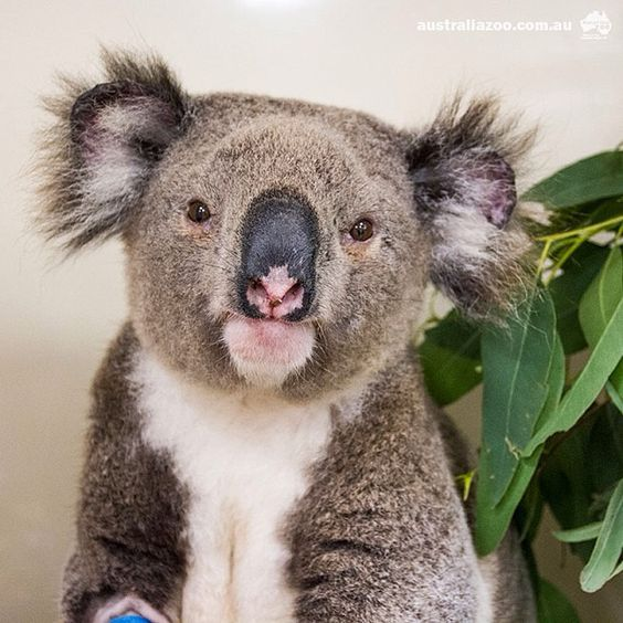 Patient Of The Week At Australia Zoo: While We Love Spring Time, It Coincides With One Of The
