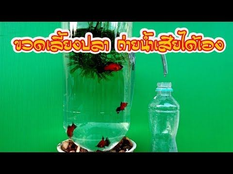 Diy ขวดเล ยงปลา กาล กน ำ Plastic Bottle Youtube