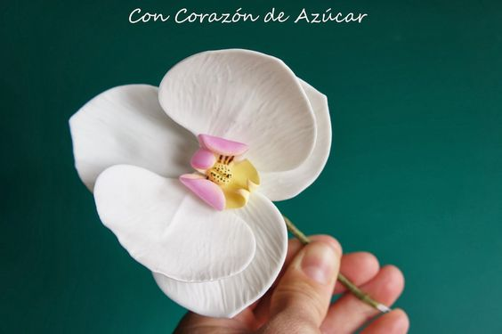 Con Corazón de Azúcar: Phalaenopsis Moth Orchid {Paso a Paso Orquídea}