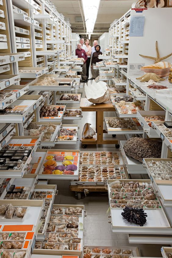 MMMH Memory deposit ....inside the archives: storage at the smithsonian natural history museum