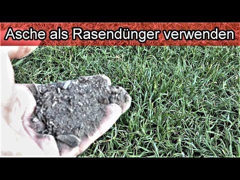 Rasen Mit Asche Im Garten Dungen Asche Als Rasendunger Rasen Pflegen Tipps Fur Den Garten Youtube Asche Rasen Asche Entsorgen